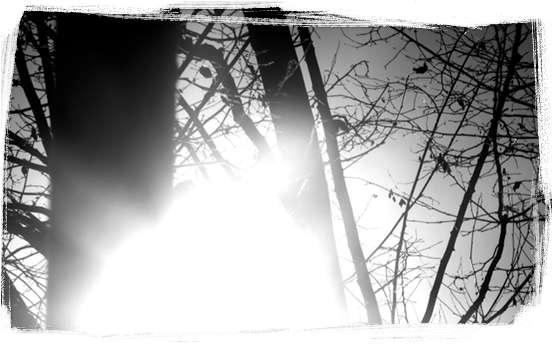 arbre nuage erhu